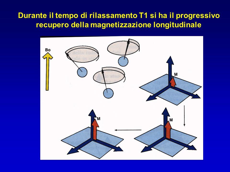 Durante il tempo di rilassamento T1 si ha il progressivo recupero della magnetizzazione longitudinale
