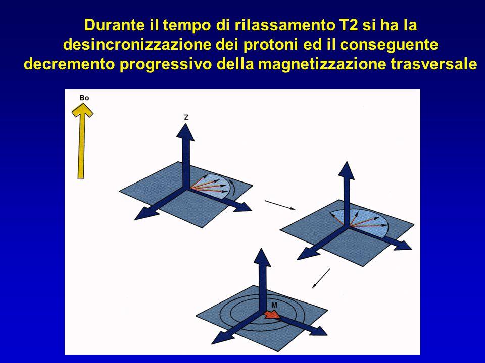 Durante il tempo di rilassamento T2 si ha la desincronizzazione dei protoni ed il conseguente decremento progressivo della magnetizzazione trasversale