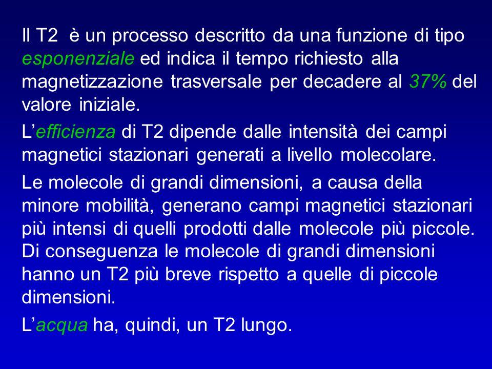 Il T2 è un processo descritto da una funzione di tipo esponenziale ed indica il tempo richiesto alla magnetizzazione trasversale per decadere al 37% del valore iniziale.