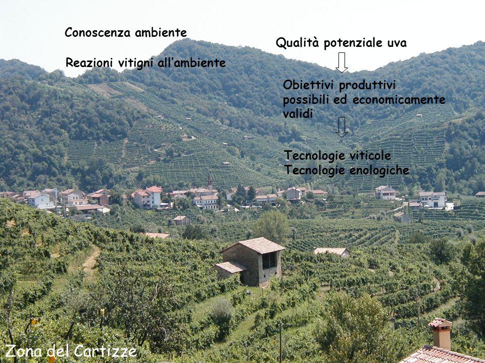 Zona del Cartizze Conoscenza ambiente Qualità potenziale uva