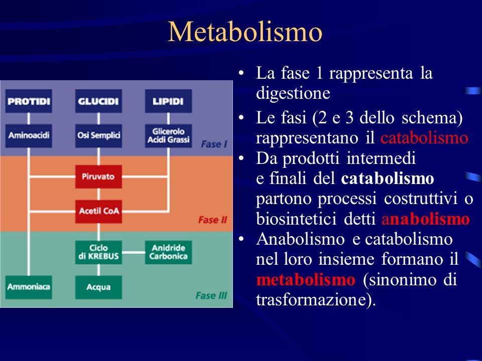 Metabolismo La fase 1 rappresenta la digestione