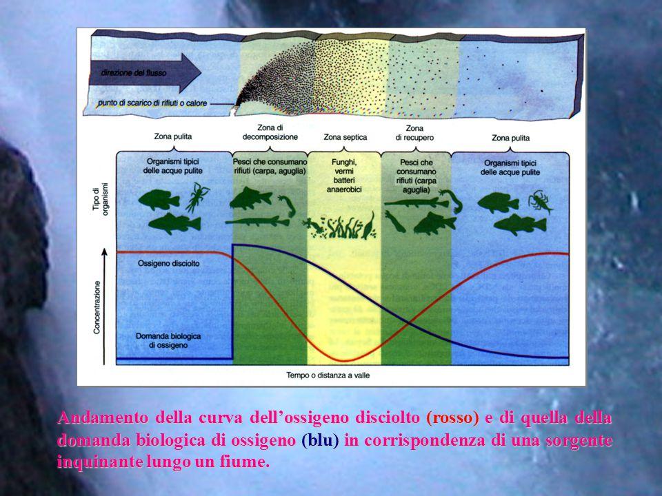 Andamento della curva dell'ossigeno disciolto (rosso) e di quella della domanda biologica di ossigeno (blu) in corrispondenza di una sorgente inquinante lungo un fiume.