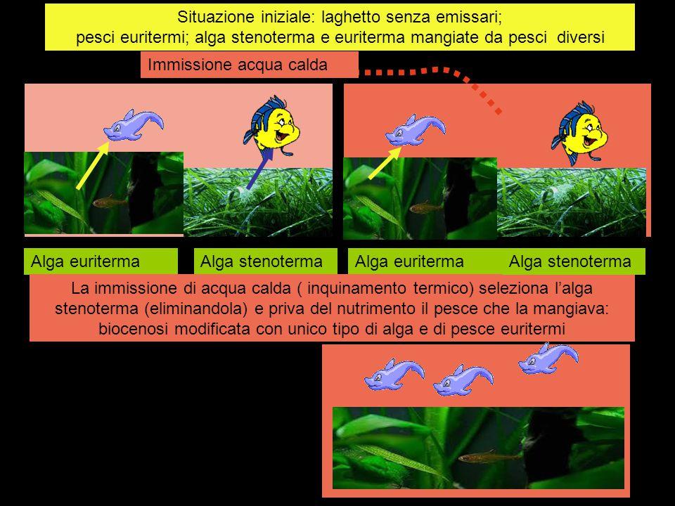 Situazione iniziale: laghetto senza emissari; pesci euritermi; alga stenoterma e euriterma mangiate da pesci diversi