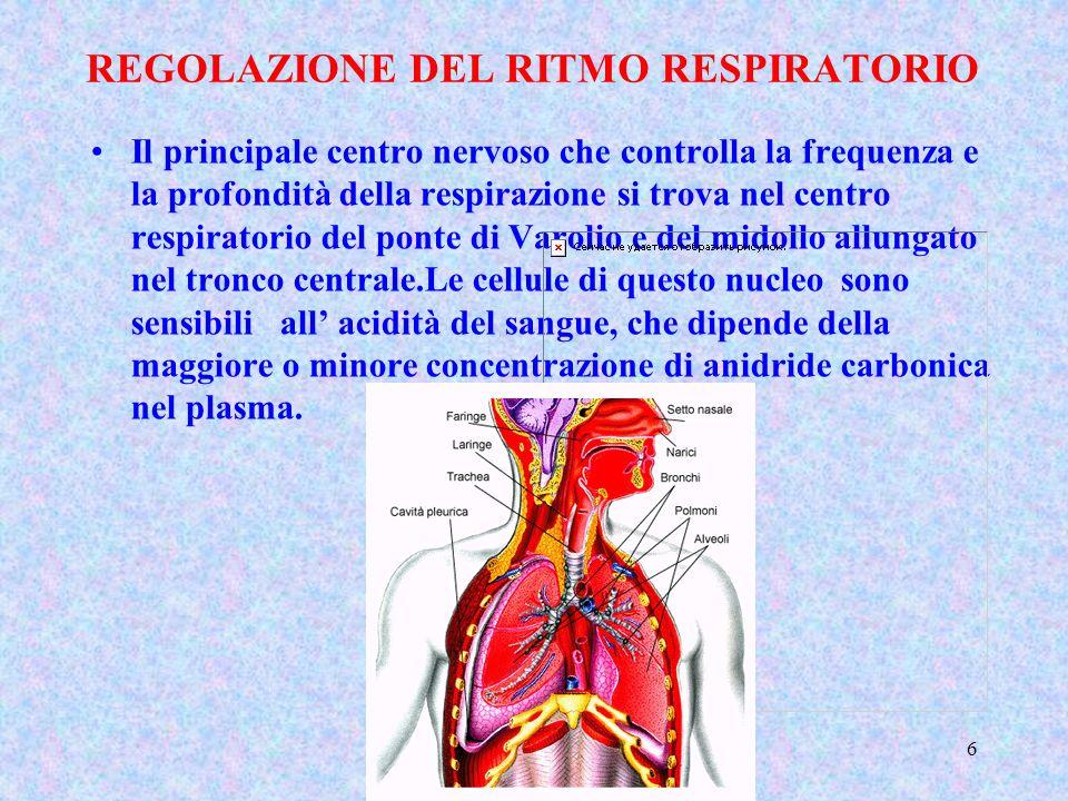 REGOLAZIONE DEL RITMO RESPIRATORIO