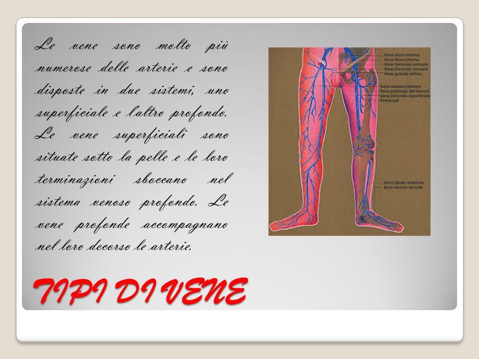 Le vene sono molto più numerose delle arterie e sono disposte in due sistemi, uno superficiale e l altro profondo. Le vene superficiali sono situate sotto la pelle e le loro terminazioni sboccano nel sistema venoso profondo. Le vene profonde accompagnano nel loro decorso le arterie.
