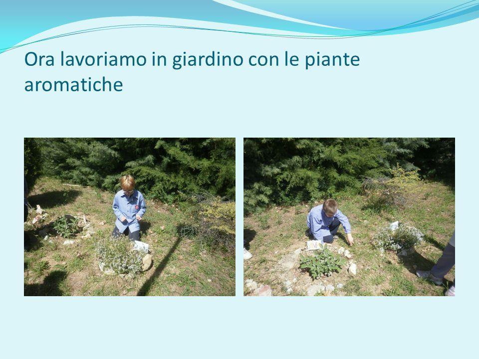 Ora lavoriamo in giardino con le piante aromatiche