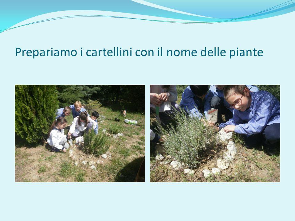 Prepariamo i cartellini con il nome delle piante