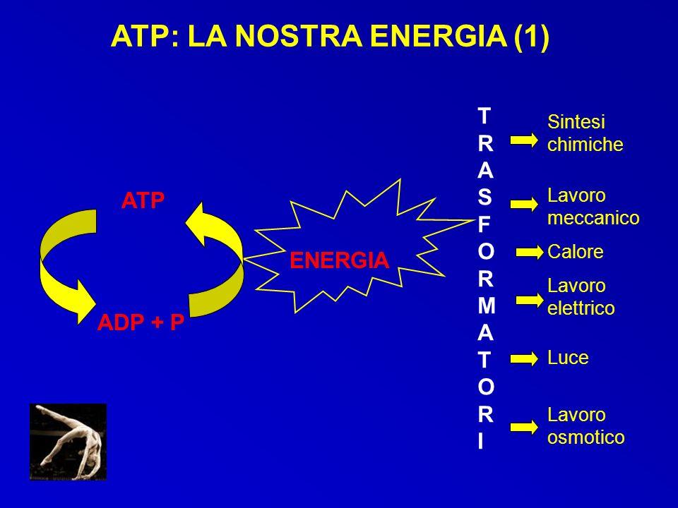 ATP: LA NOSTRA ENERGIA (1)