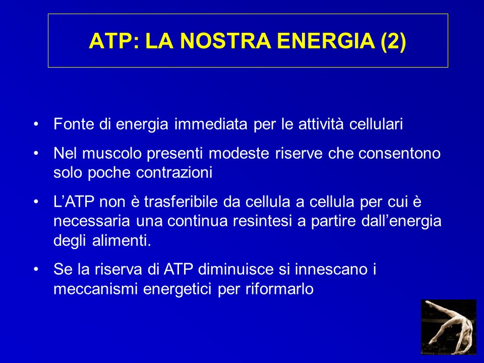 ATP: LA NOSTRA ENERGIA (2)