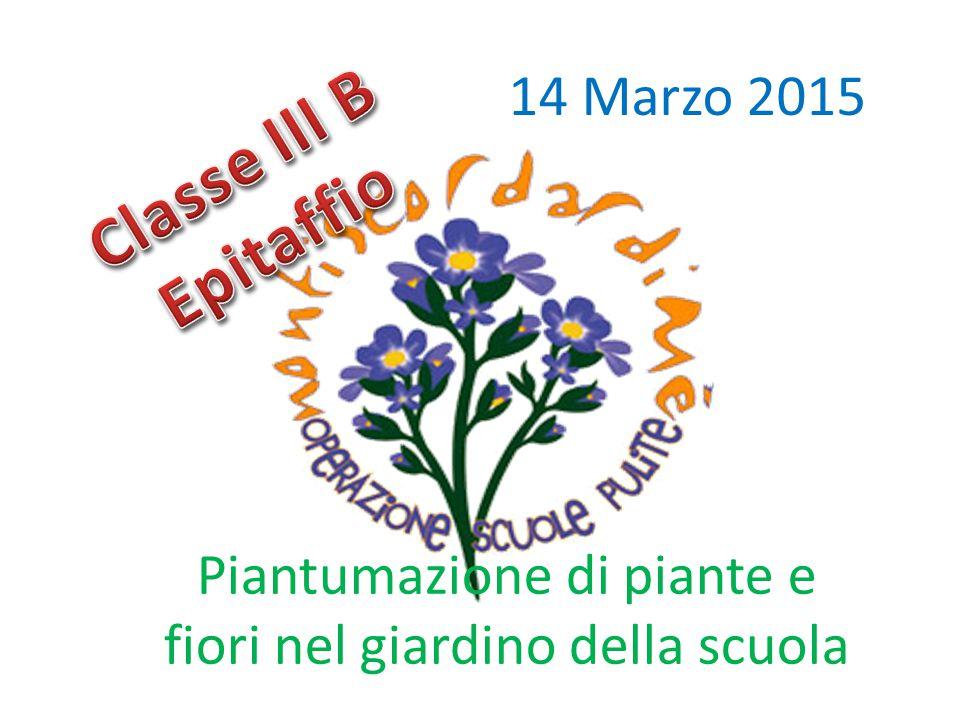Piantumazione di piante e fiori nel giardino della scuola