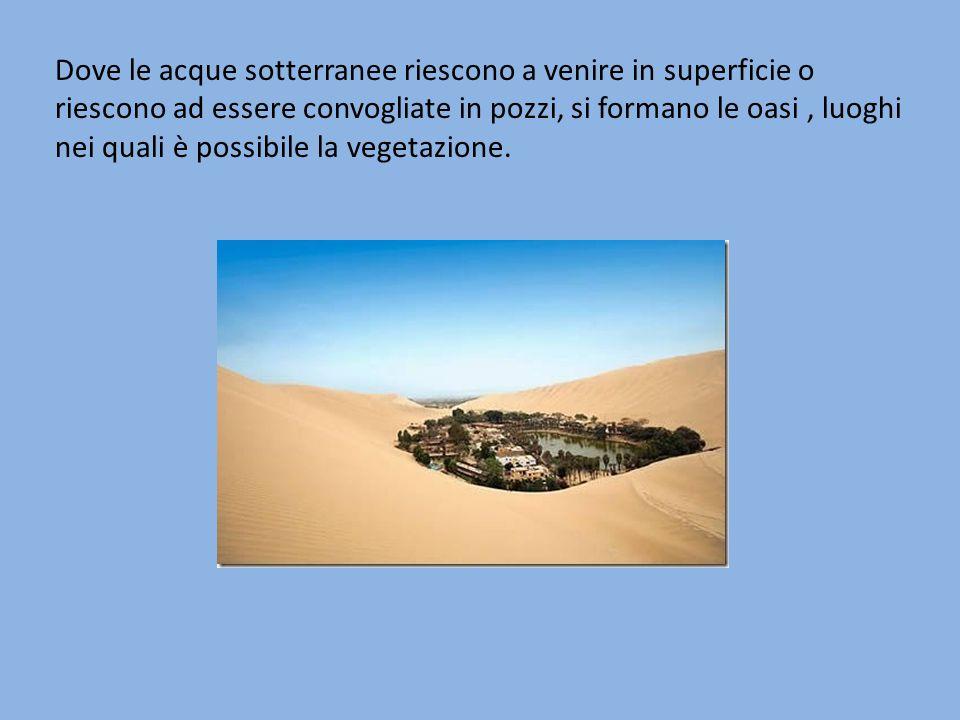 Dove le acque sotterranee riescono a venire in superficie o riescono ad essere convogliate in pozzi, si formano le oasi , luoghi nei quali è possibile la vegetazione.