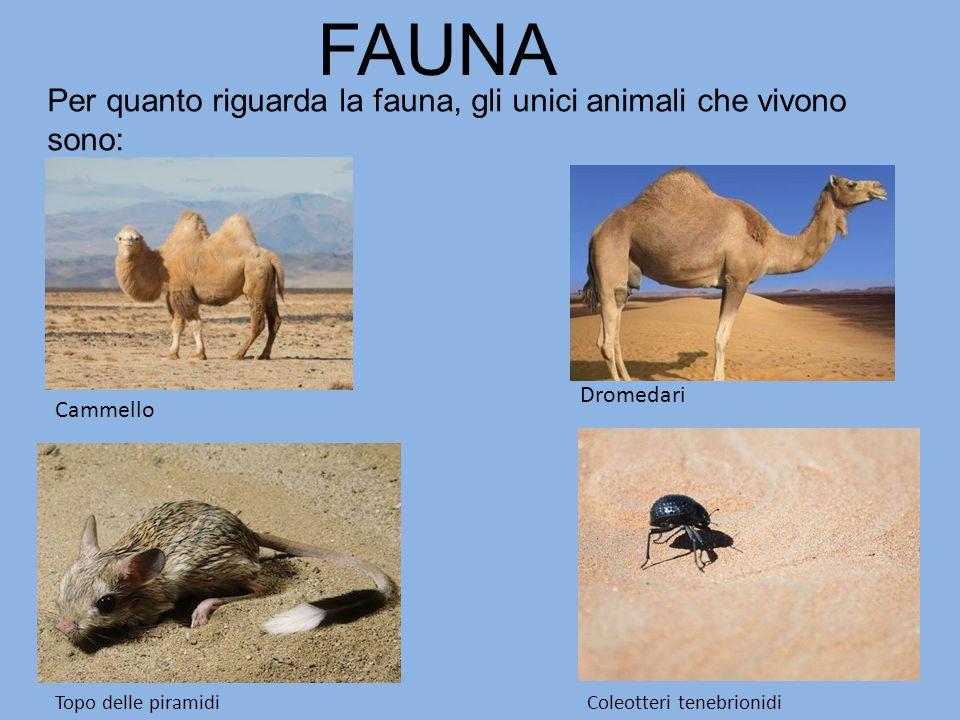 FAUNA Per quanto riguarda la fauna, gli unici animali che vivono sono:
