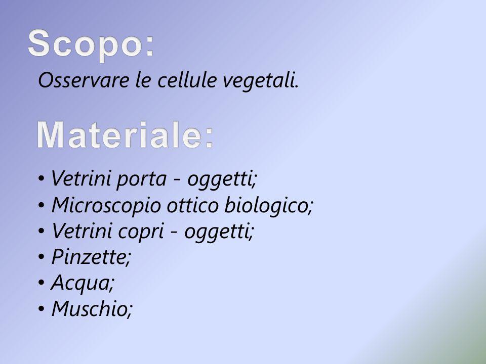 Scopo: Materiale: Osservare le cellule vegetali.