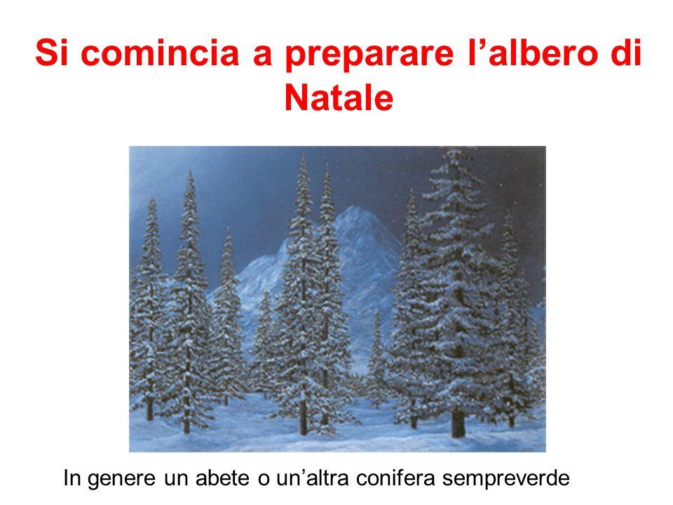 Si comincia a preparare l'albero di Natale