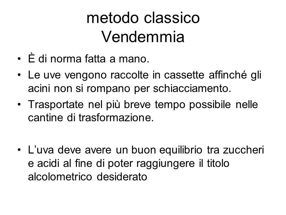 metodo classico Vendemmia