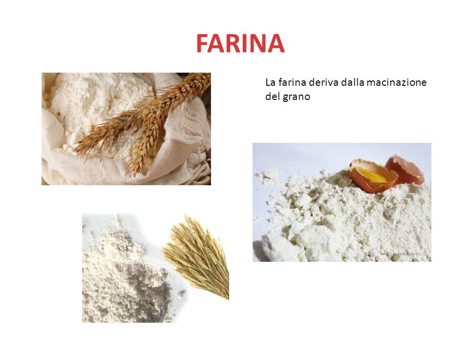 FARINA La farina deriva dalla macinazione del grano