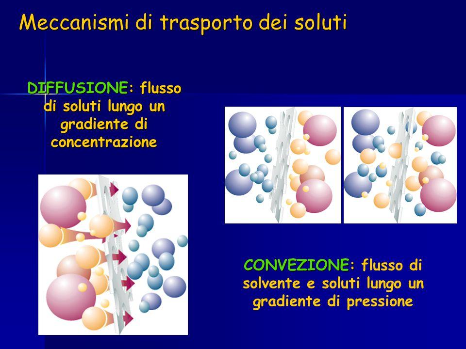 DIFFUSIONE: flusso di soluti lungo un gradiente di concentrazione