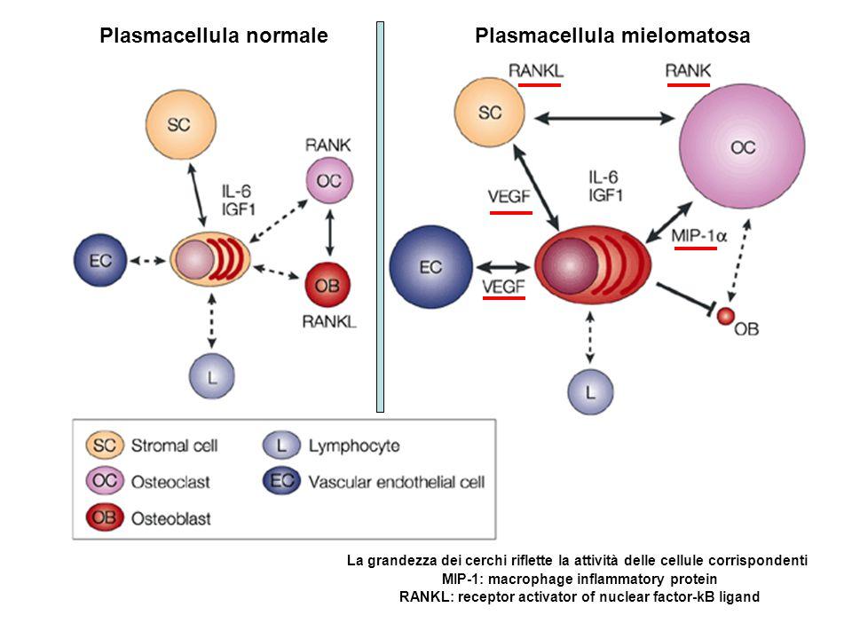 Plasmacellula normale Plasmacellula mielomatosa