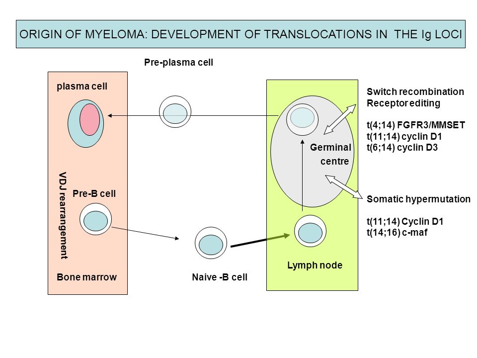 ORIGIN OF MYELOMA: DEVELOPMENT OF TRANSLOCATIONS IN THE Ig LOCI