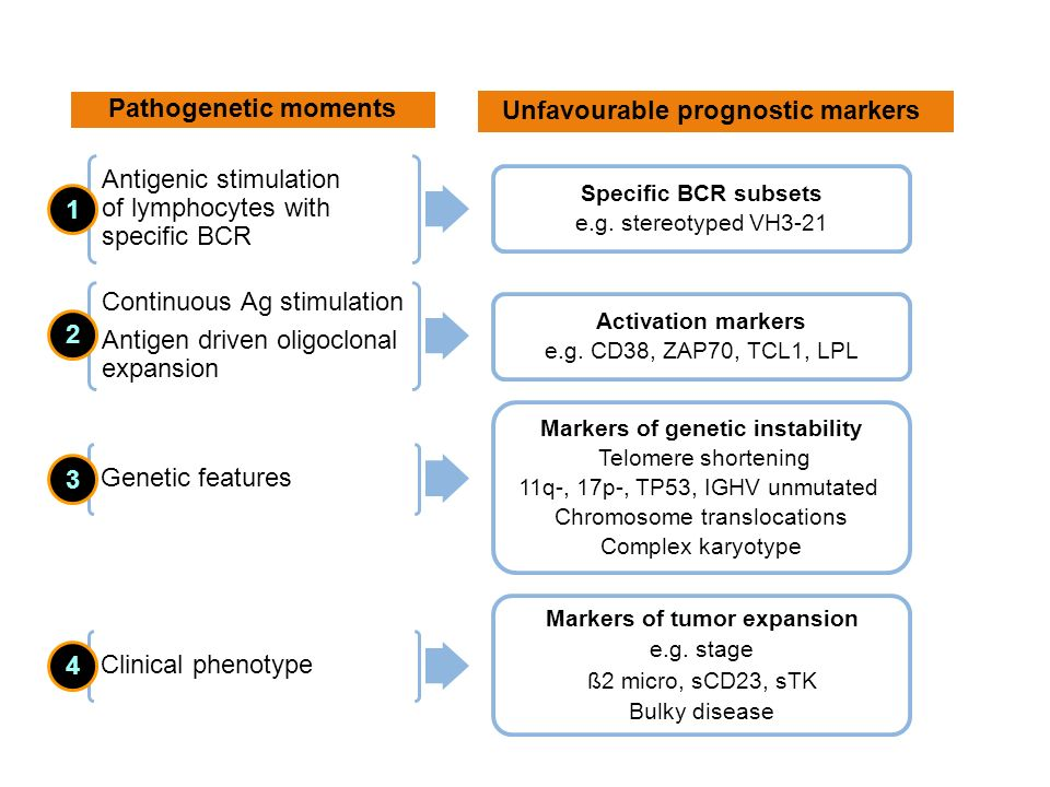 Pathogenetic moments Unfavourable prognostic markers 1 2 3 4