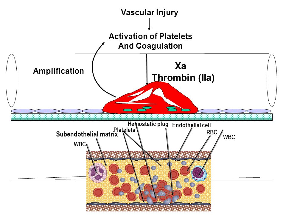 Activation of Platelets