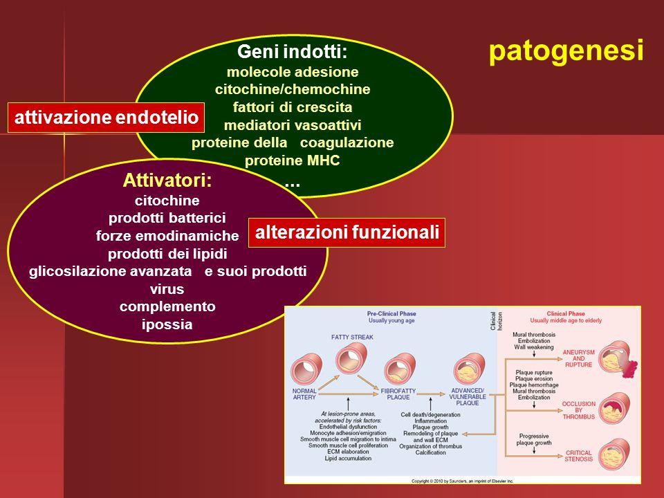 patogenesi Geni indotti: ... attivazione endotelio Attivatori: