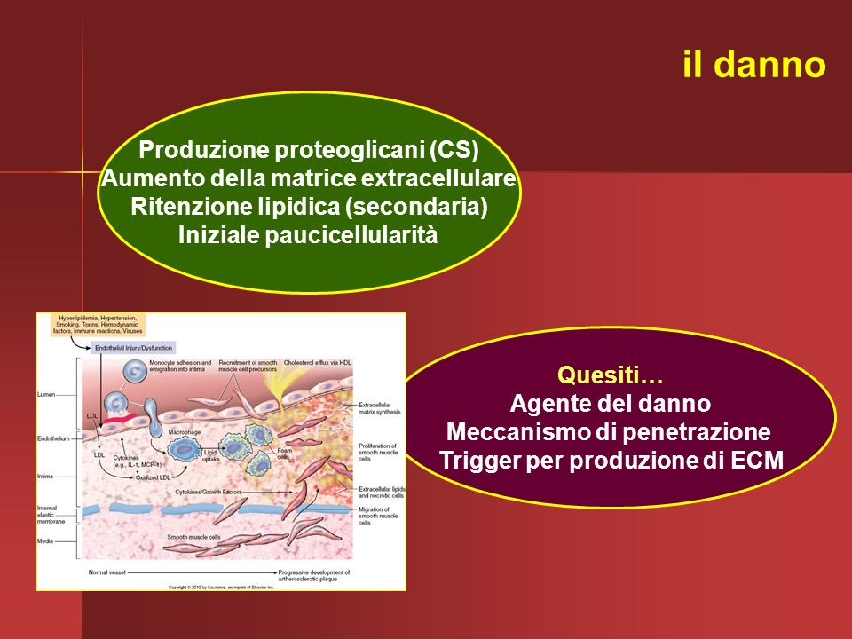il danno Produzione proteoglicani (CS)