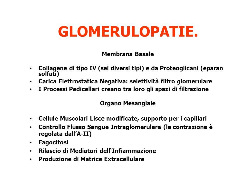 GLOMERULOPATIE. Membrana Basale