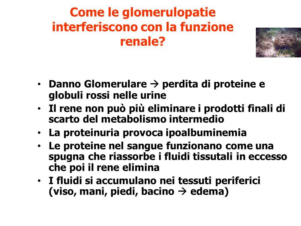 Come le glomerulopatie interferiscono con la funzione renale