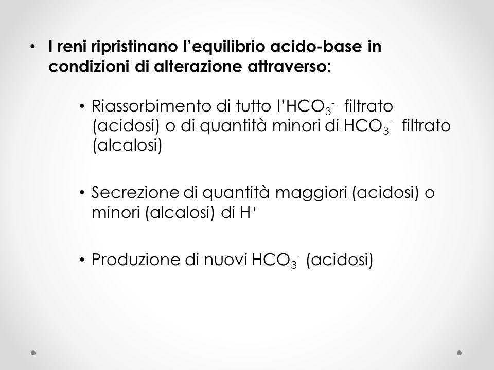 I reni ripristinano l'equilibrio acido-base in condizioni di alterazione attraverso: