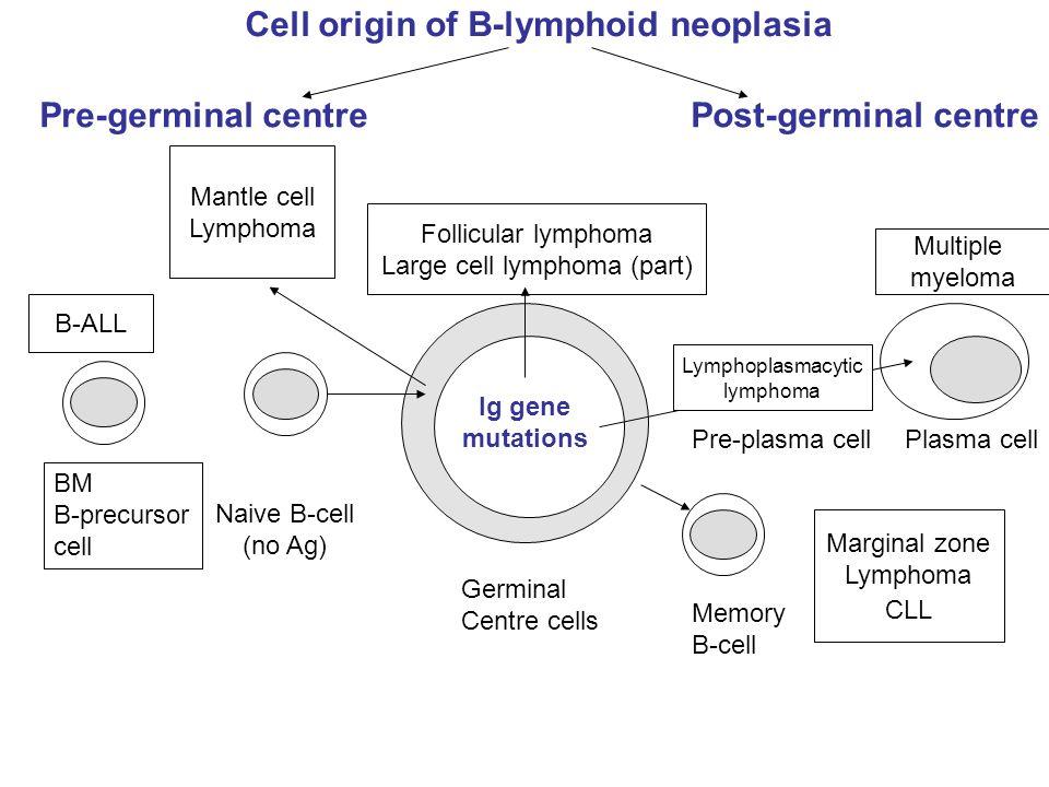 Cell origin of B-lymphoid neoplasia