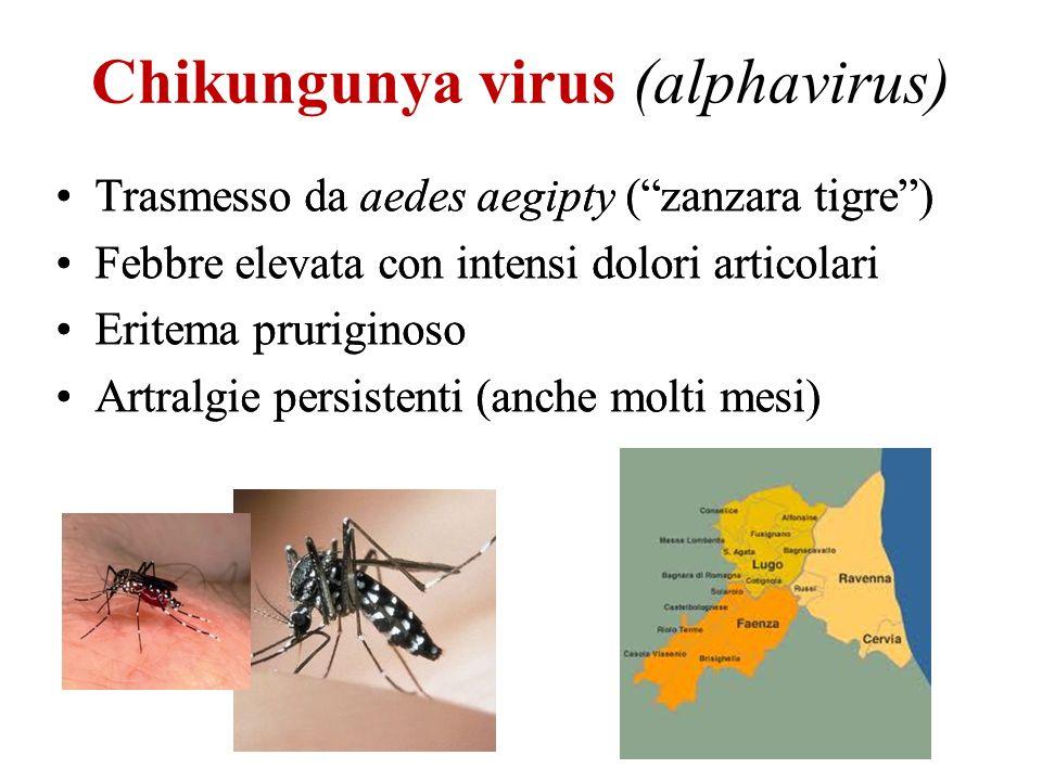 Chikungunya virus (alphavirus)