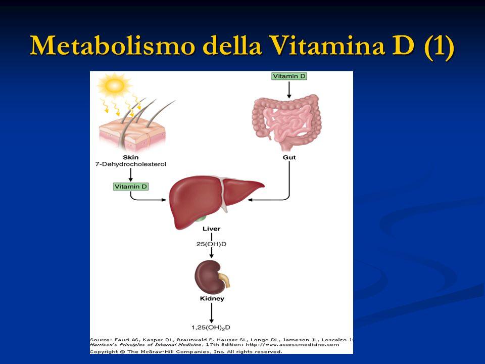 Metabolismo della Vitamina D (1)