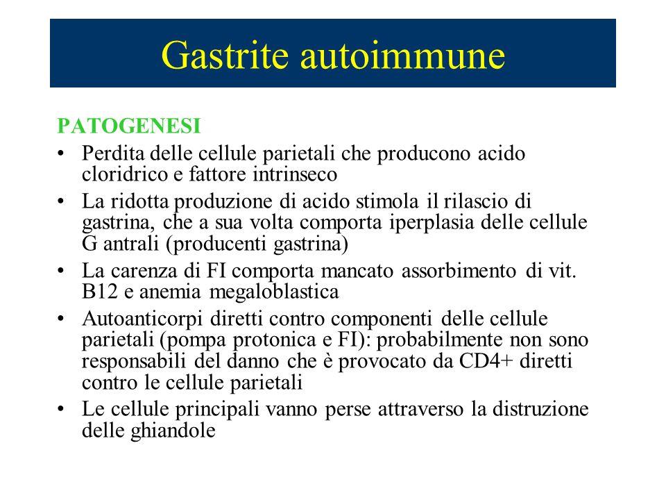 Gastrite autoimmune PATOGENESI