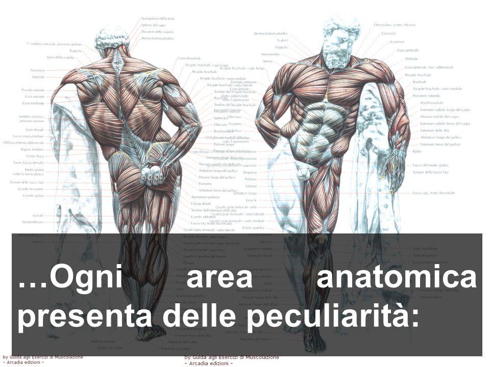…Ogni area anatomica presenta delle peculiarità:
