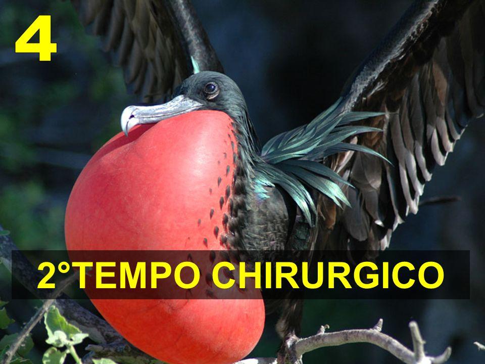 4 2°TEMPO CHIRURGICO