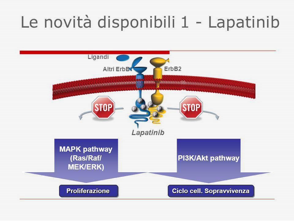 MAPK pathway (Ras/Raf/ MEK/ERK)