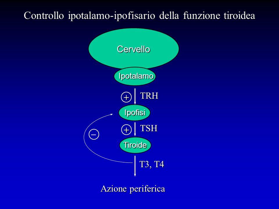 Controllo ipotalamo-ipofisario della funzione tiroidea