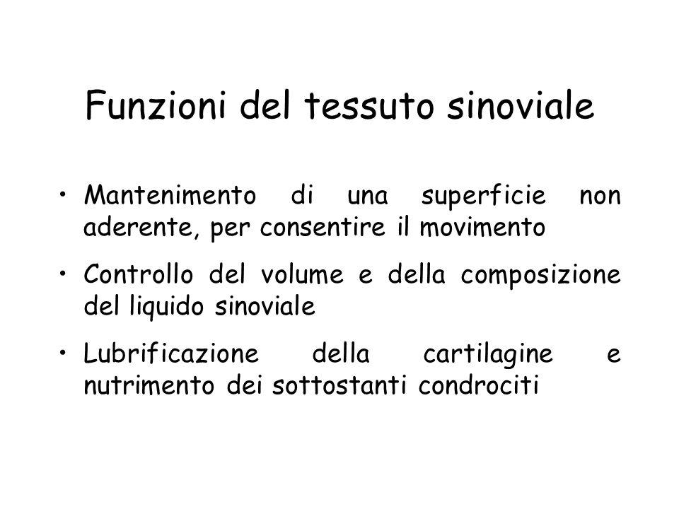 Funzioni del tessuto sinoviale