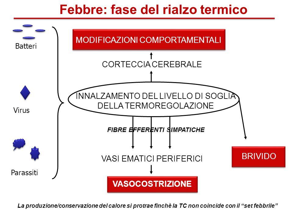 Febbre: fase del rialzo termico FIBRE EFFERENTI SIMPATICHE
