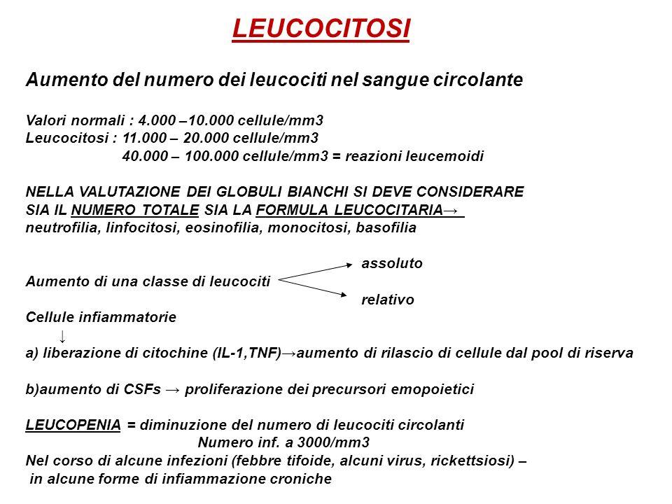 LEUCOCITOSI Aumento del numero dei leucociti nel sangue circolante