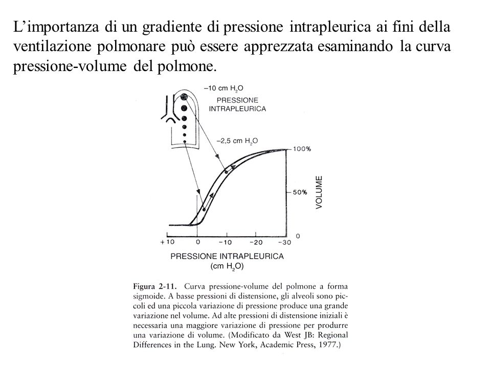 L'importanza di un gradiente di pressione intrapleurica ai fini della ventilazione polmonare può essere apprezzata esaminando la curva pressione-volume del polmone.