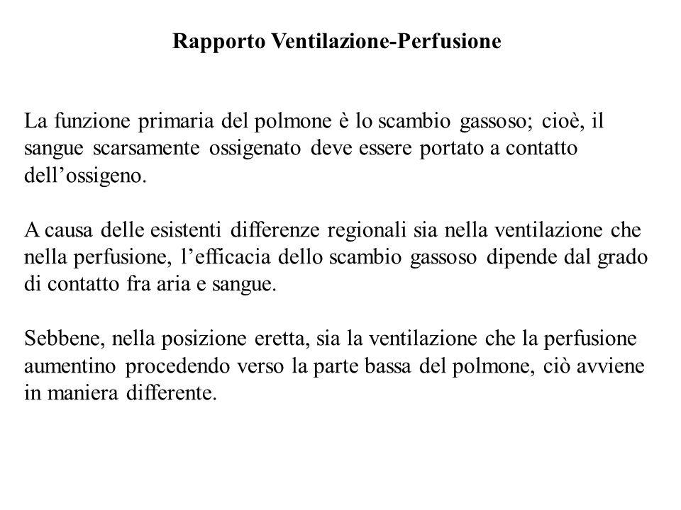 Rapporto Ventilazione-Perfusione