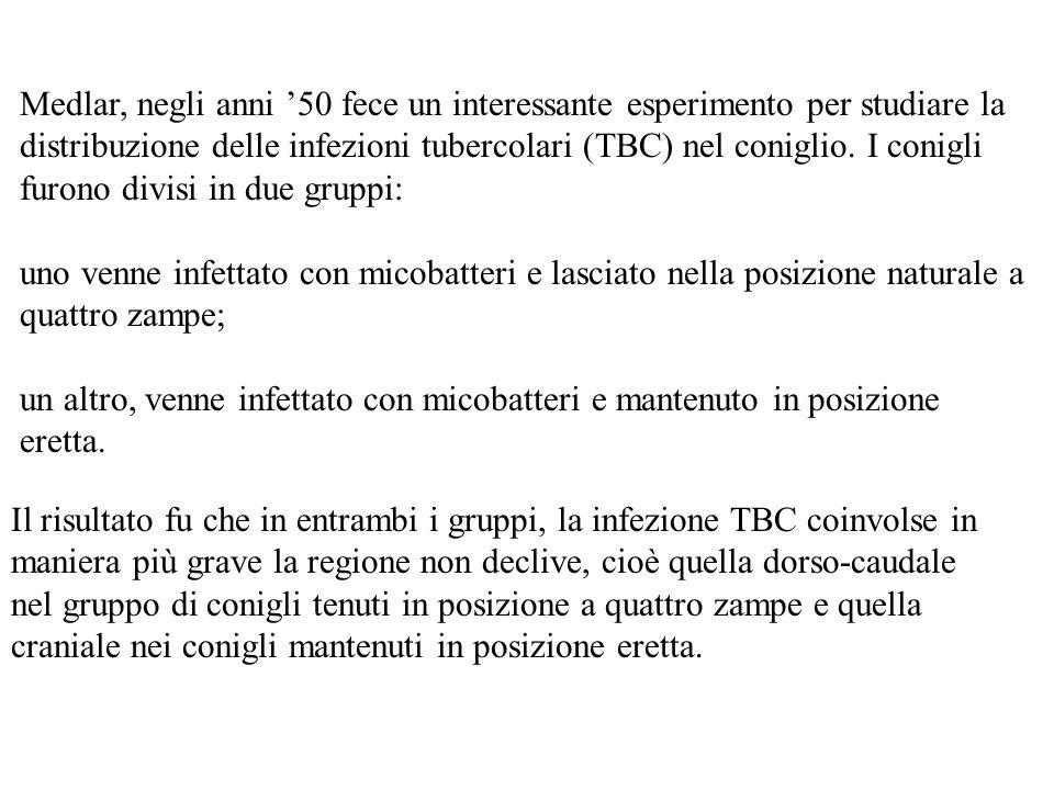 Medlar, negli anni '50 fece un interessante esperimento per studiare la distribuzione delle infezioni tubercolari (TBC) nel coniglio. I conigli furono divisi in due gruppi: