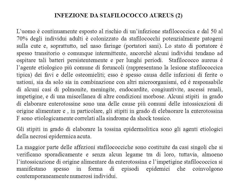 INFEZIONE DA STAFILOCOCCO AUREUS (2)