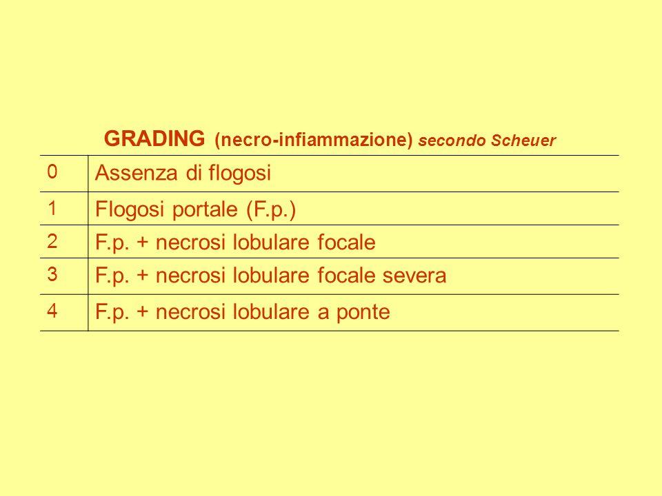 GRADING (necro-infiammazione) secondo Scheuer