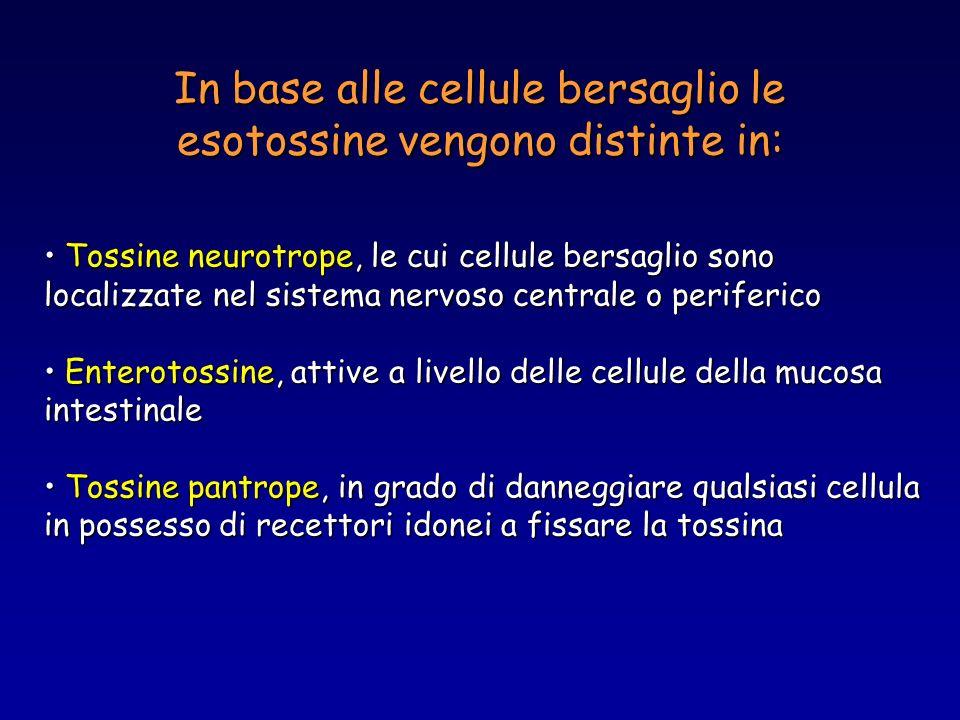 In base alle cellule bersaglio le esotossine vengono distinte in: