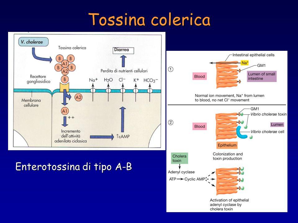 Tossina colerica Enterotossina di tipo A-B