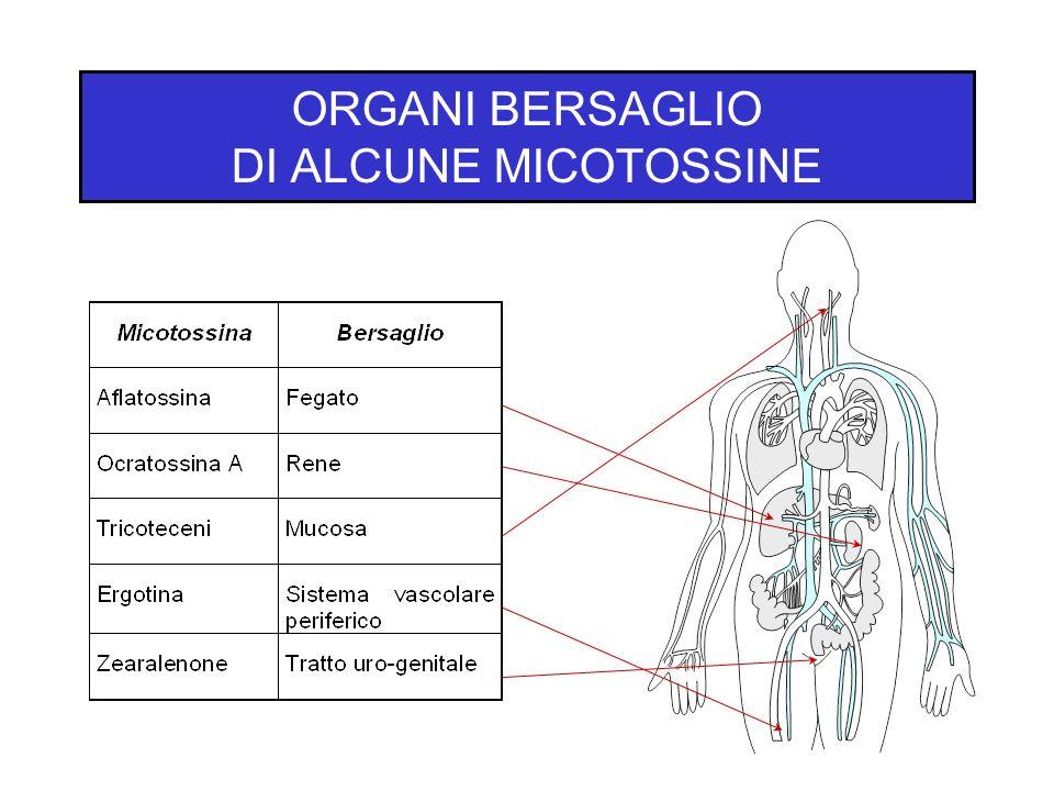 ORGANI BERSAGLIO DI ALCUNE MICOTOSSINE