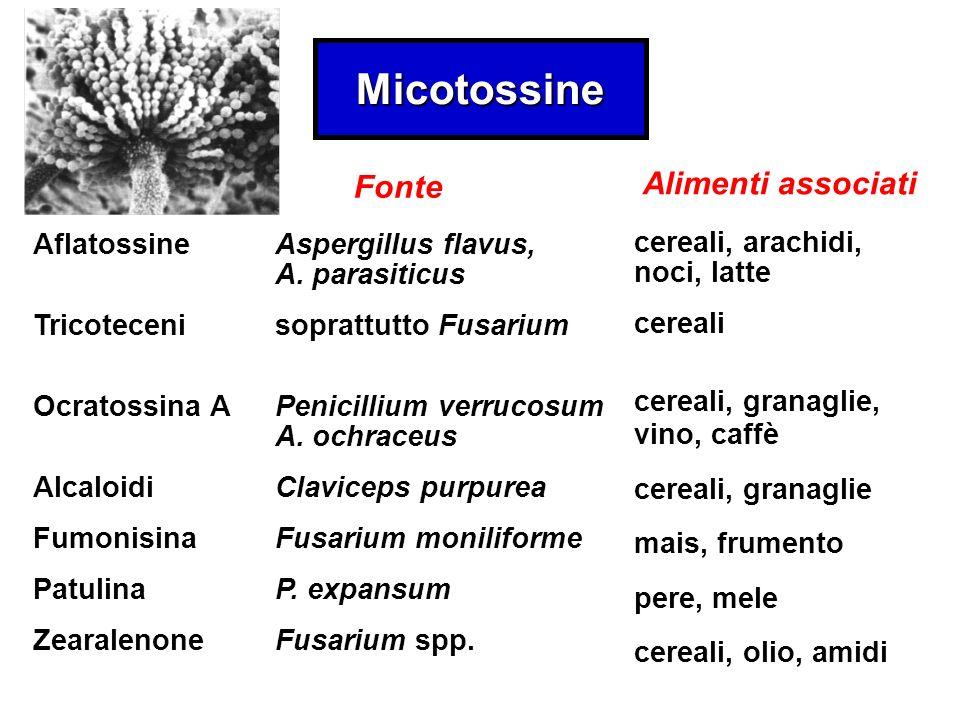 Micotossine Alimenti associati Fonte Aflatossine Tricoteceni
